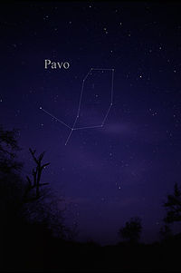 Constellation Pavo.jpg