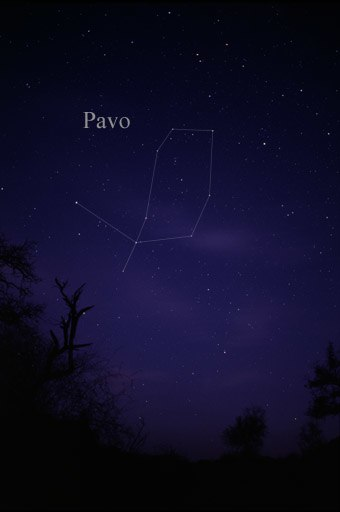 Constellation Pavo