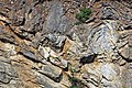 Copper Creek Thrust Fault (Thorn Hill section, northeastern Tennessee, USA) 6.jpg