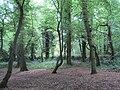 Coppett's Wood 2.JPG