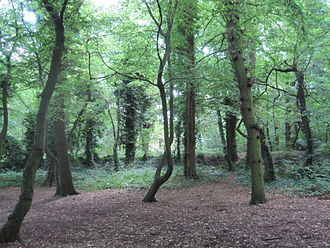 Coppett's Wood and Scrublands - Coppett's Wood