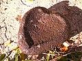 Corazón De Piedra - panoramio.jpg
