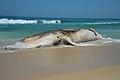 Corpo de baleia encalhada na Praia do Arpoador, no Rio (24568319958).jpg