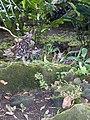 Costa Rica (6110297796).jpg