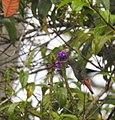 Costa Rica DSCN2640-new (31093410626).jpg