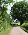 Country lane at Weston under Penyard - geograph.org.uk - 448466.jpg