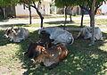 Cows III.jpg