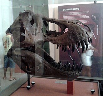 Collection of fossils in the National Museum of Brazil - Image: Crânio de Tiranossauro Rex (Stênio) 01