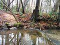 Creek with stump at Fallon Park in Raleigh, North Carolina.jpg