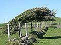 Crockanore - geograph.org.uk - 465498.jpg