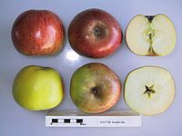 Cross section of Dr Ramburg, National Fruit Collection (acc. 1967-067).jpg