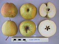Cross section of Nugget, National Fruit Collection (acc. 1975-033).jpg