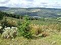 Crynant Forestry Walk - geograph.org.uk - 963698.jpg