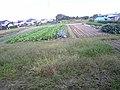 Cultivo - panoramio.jpg