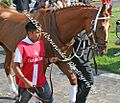 Curlin in the paddock at churchill downs before the Stephen Foster Handicap (2972612102).jpg