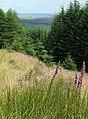 Cwm Dulas Plantation East, Ceredigion - geograph.org.uk - 929519.jpg