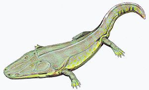 Carnian - Cyclotosaurus