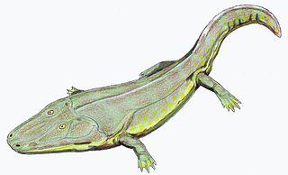 <i>Cyclotosaurus</i> genus of reptiles (fossil)