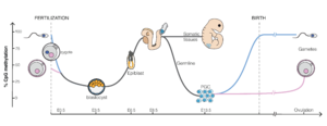 DNA methylation - Dynamic of DNA methylation during mouse embryonic development. E3.5-E6, etc., refer to days after fertilization. PGC: primordial germ cells