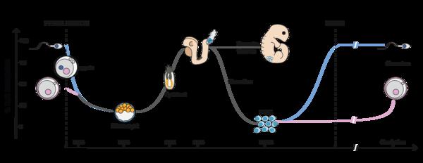 Pemrograman Ulang