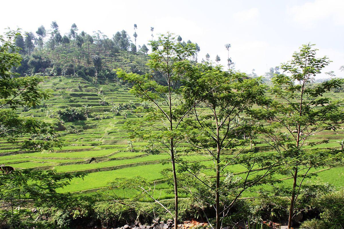 Tasikmalaya Regency Wikipedia