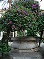 DSC00889 - Taormina - Hotel San Domenico -sec. XVI- - Foto di G. DallOrto.jpg