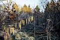 De Bilt - Beukenburg - bushes (31847870187).jpg