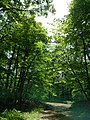 Decker ave to Fire Tower to Greyrun davis farm - panoramio (41).jpg