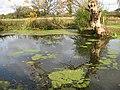 Deep pond, Madresfield - geograph.org.uk - 1565684.jpg