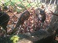 Deer Park Tirupati 04.jpg