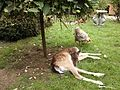 Deer and chicken.jpg
