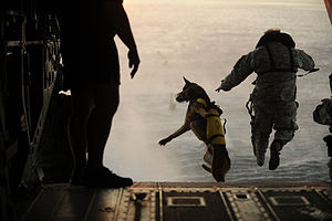 Defense.gov News Photo 110301-F-RR679-717 - A U.S. Army soldier with the 10th Special Forces Group and his military working dog jump off the ramp of a CH-47 Chinook helicopter from the 160th.jpg