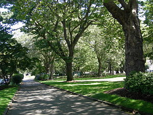 Denny Park (Seattle) - In August 2007