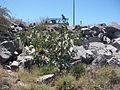 Desert plants 11.JPG