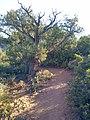 Devil's Bridge Trail, Sedona, Arizona - panoramio (23).jpg