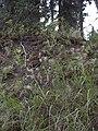 Dewey Creek Water Quality Testing, Yukon-Charley Rivers, 2003 (5db0a6e4-aee2-4ef3-98a8-a7f5fd1873a6).jpg