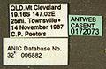 Diacamma australe casent0172073 label 1.jpg