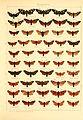 Die Gross-Schmetterlinge der Erde (Taf. 6) BHL9921443.jpg