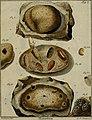 Die Maurerbiene - in einer Rede beschrieben (1764) (14781107435).jpg
