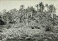 Die Pflanzenwelt Afrikas, insbesondere seiner tropischen Gebiete - Grundzge der Pflanzenverbreitung im Afrika und die Charakterpflanzen Afrikas (1910) (20940288115).jpg