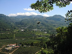 Coffee production in Costa Rica - A coffee plantation in the Orosí valley
