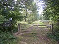 Ditton Park Wood - geograph.org.uk - 59427.jpg