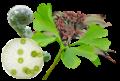 Diversity of plants.png