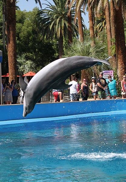 File:Dolphin 2 (15560627261).jpg