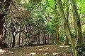 Donard forest, Newcastle - geograph.org.uk - 1348817.jpg