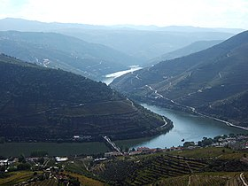 Photographie de vignobles (vinhateiros) au bords du fleuve du Douro.