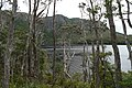 Dove Lake Circuit Walking Track, Cradle Mountain - Lake St Clair National Park 22.jpg