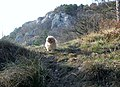 Draga Sant'Elia,panorama Carsico,sopra la Val Rosandra - panoramio.jpg