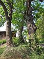 Drei Eichen bei Elfershausen, 2.jpg