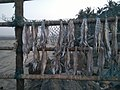 Dried Fish .jpg
